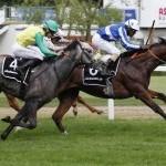 22 Nennungen für Pferdewetten.de - Bavarian Classic
